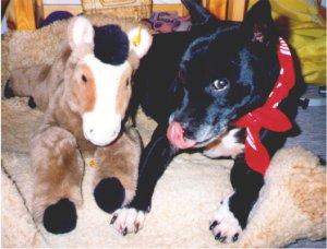 Eigene Erfahrungen mit dem Staffordshire Bullterrier