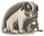 Die Beißkraft der Kampfhunde