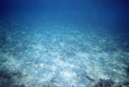 Mehr als 40 Fischarten sind gefährdet oder vom Aussterben bedroht!