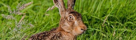 Für artenreiche und gesunde Wildbestände