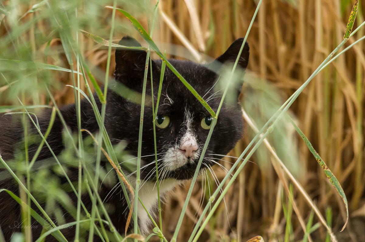 Tierschutz mit Kastrationspflicht für Freigängerkatzen!