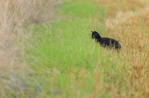 Auf der Jagd am Feldrand