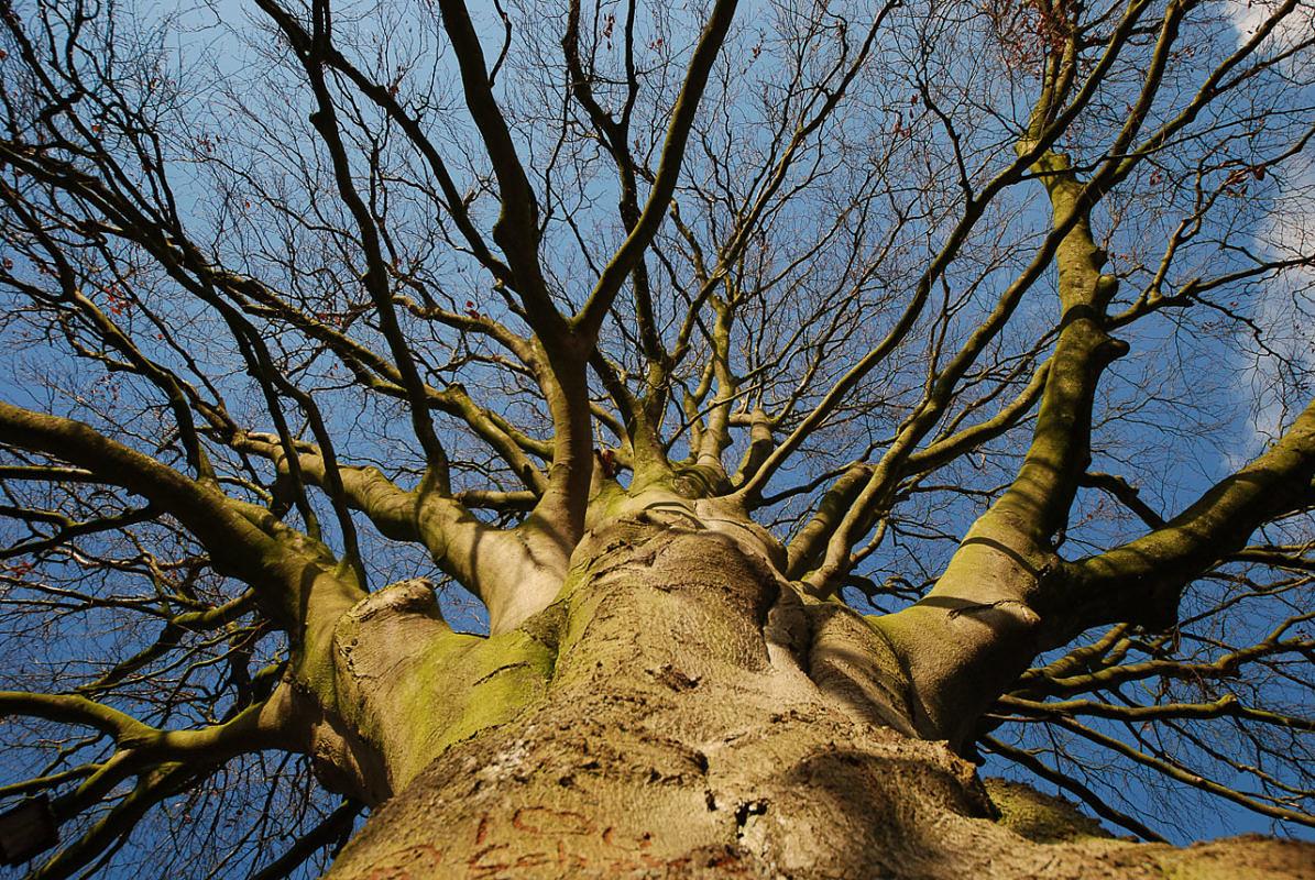 Merksätze für Schatt- und Lichtbaumarten