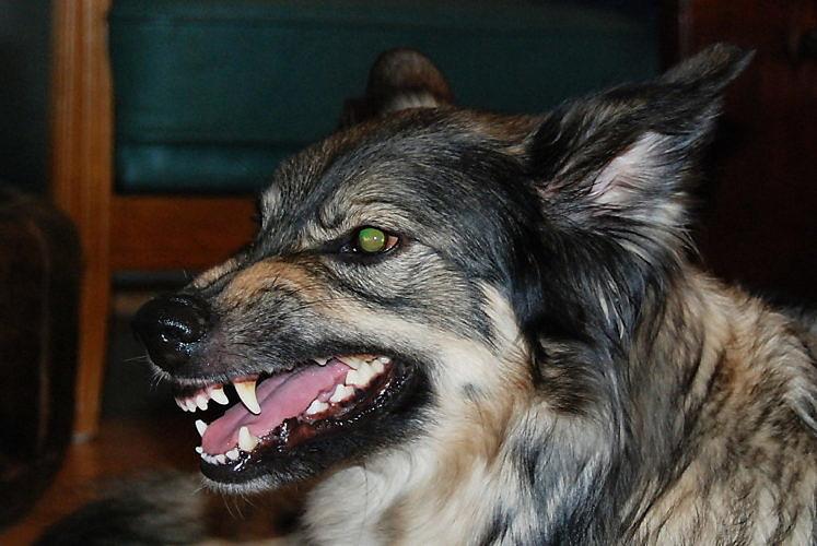 Tödliche Attacken durch Hunde und die Berichterstattung dazu!
