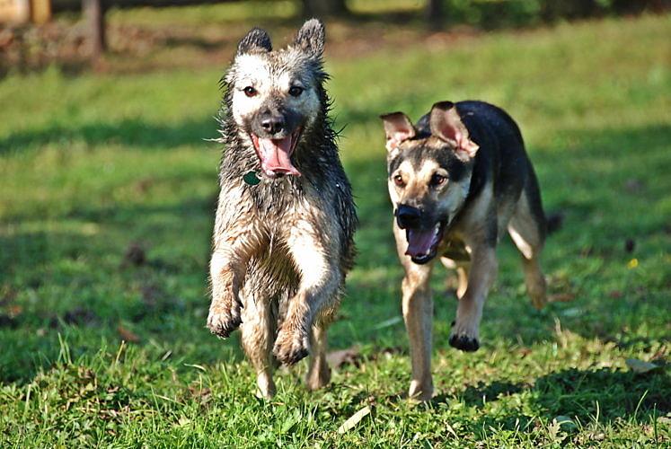 Neues Hundegesetz in Niedersachsen – Sachverstand scheint über Populismus zu siegen