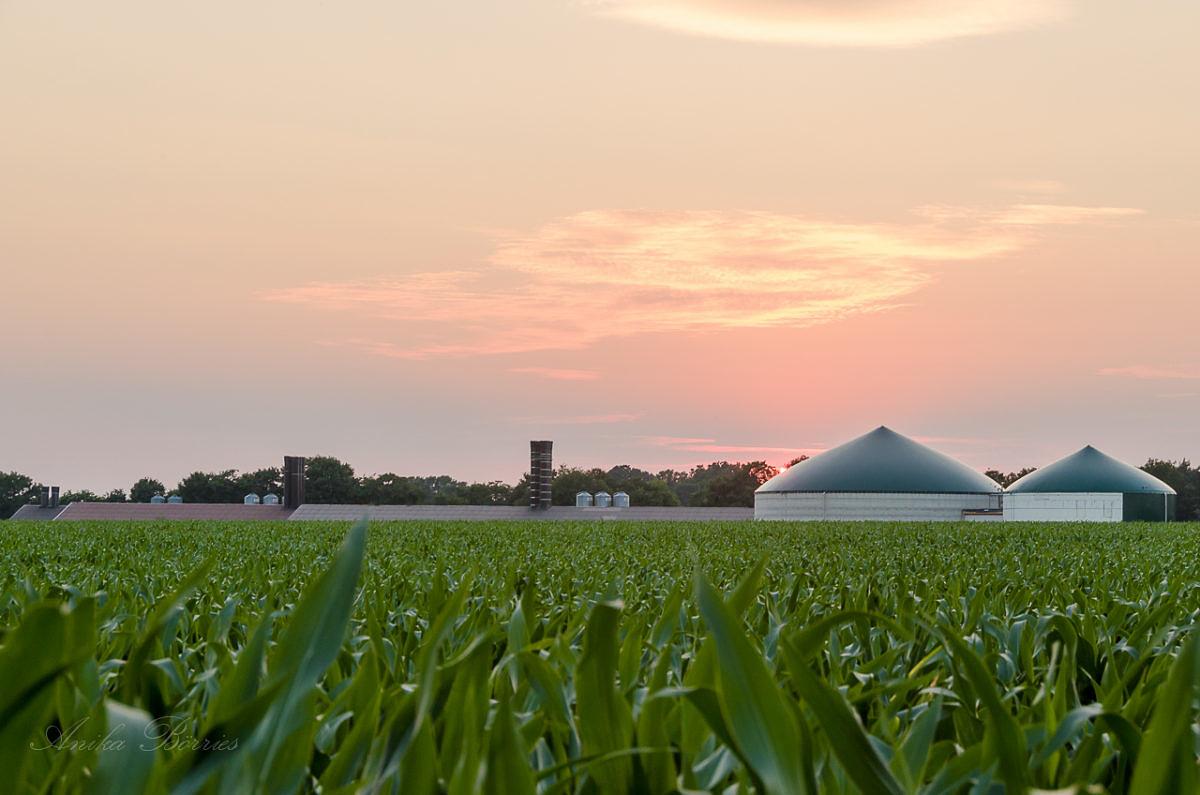 Nachhaltiges Biogas?!