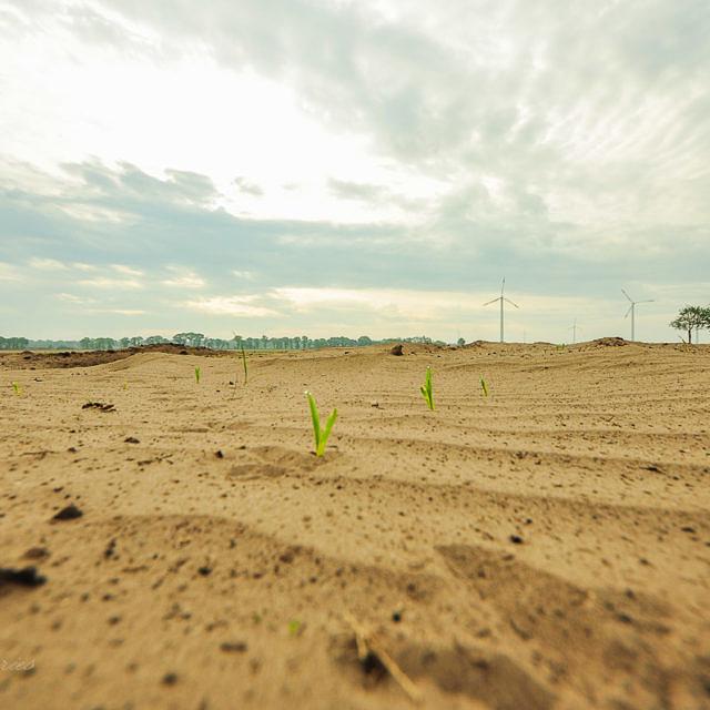 Globale Umweltprobleme: Landwirtschaft spielt Schlüsselrolle