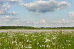 Wie Biodiversität und die Produktivität von Ökosystemen zusammenhängen