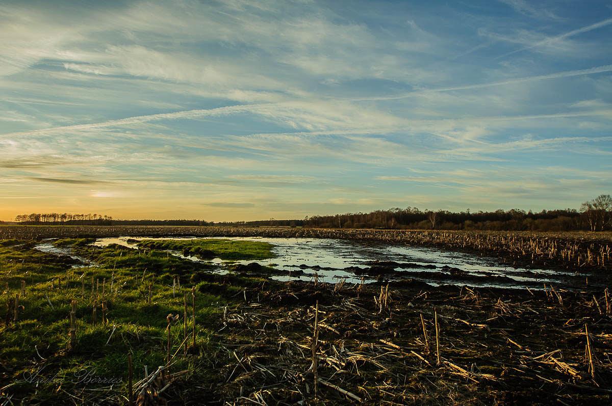 Agrarpolitik der kleinen Schritte – kein Mut zum Umdenken