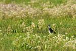 Papenburg: Tagung beleuchtet die Situation der Wiesenvögel