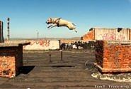 Was ein gut geförderter Hund können kann...