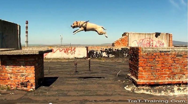 Was ein gut geförderter Hund können kann…
