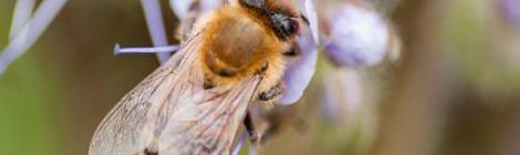 Hoffnung für Bienen, Imker und Landwirtschaft