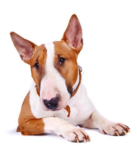 Zur neuen Hundesteuer in Westerstede