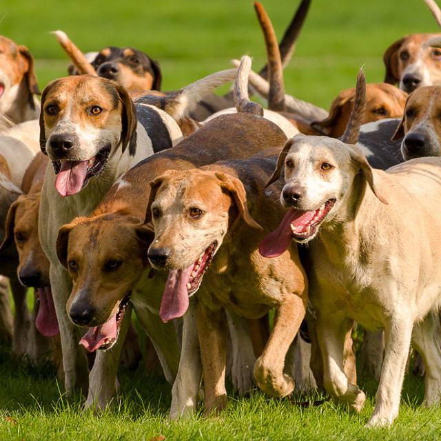 Rassebedingte Charaktereigenschaften von Hunden