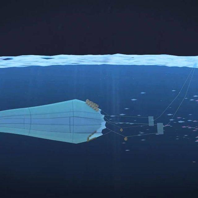 Die Überfischung der Meere