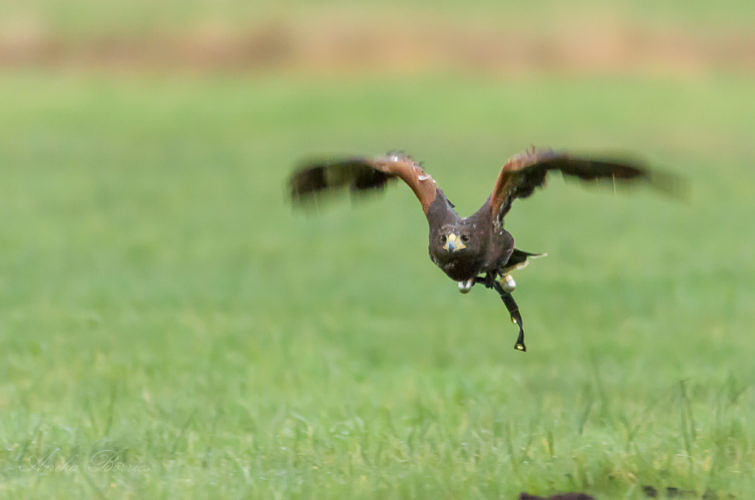 Unterwegs mit Falknern