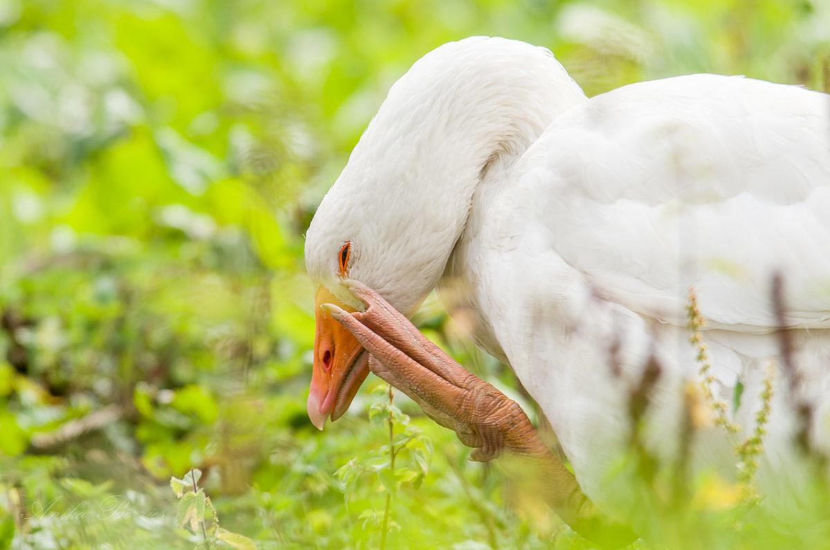 Vogelgrippe – Fortsetzung