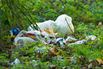 Überall liegt Müll in der Botanik – Muss das sein?