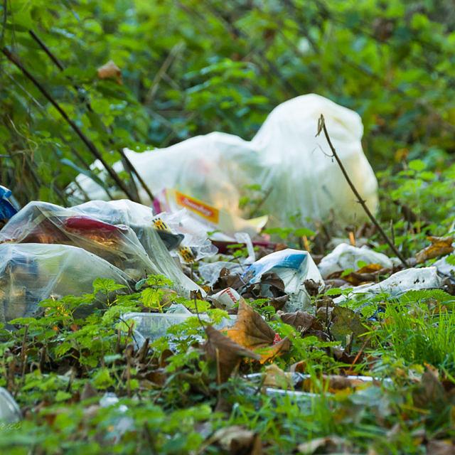 Überall liegt Müll in der Botanik - Muss das sein?