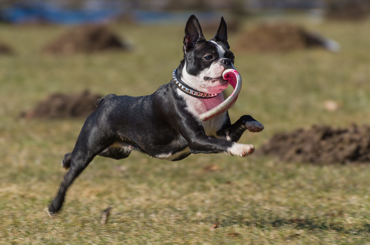 Rasseliste für Hunde in Schleswig-Holstein bald Geschichte