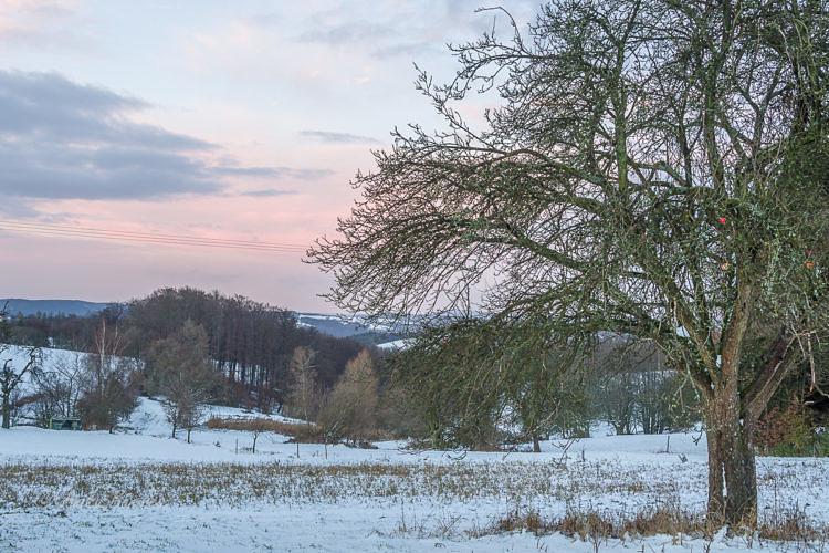 -Apfelbaum, Januar, Schnee-20170104
