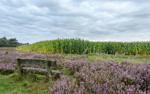 Stapelfelder Fototage mit Emsländerin – Orientierung im Bildertsunamie unserer Zeit