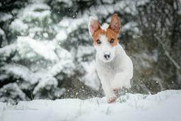 Knuth im Schnee und überhaupt
