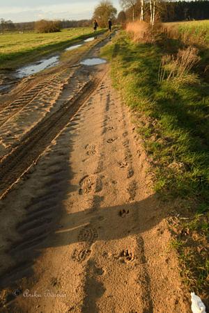 Wolfsfährte auf einem Sandweg, Foto: Anika Börries