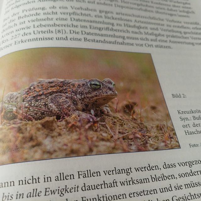 Meine Kreuzkröte in einem Fachartikel zum Artenschutz
