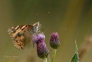 Insektensterben - die Datenlage macht nachdenklich