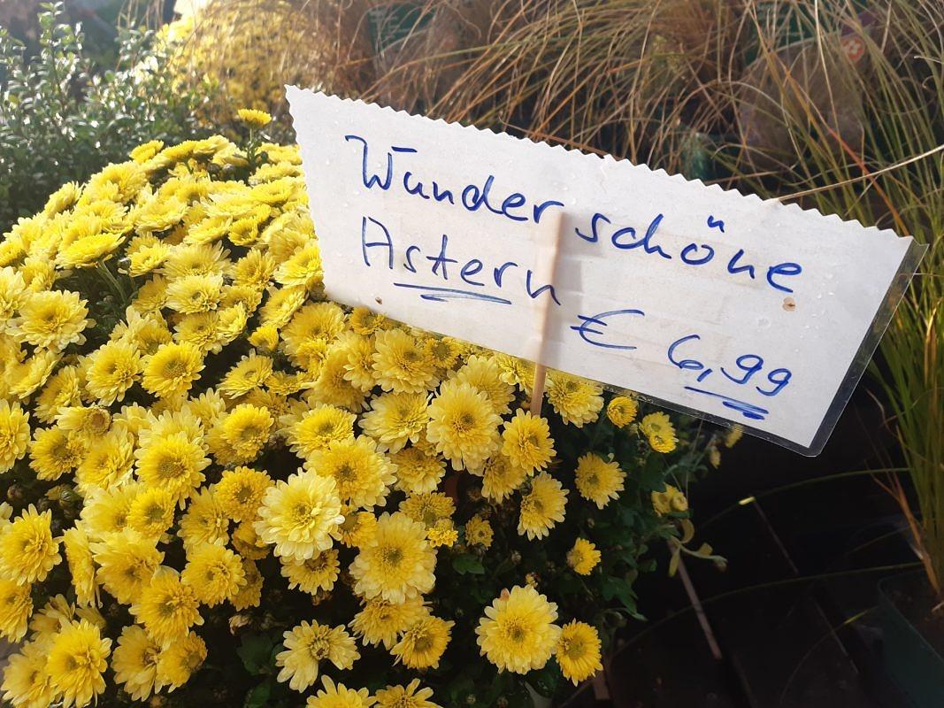 """""""Wunderschöne Astern"""""""